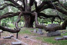 bomen / Mooie, aparte, oude bomen