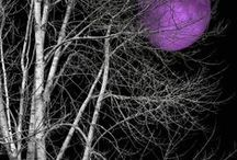 ☠ fioletowe / purple / kolory