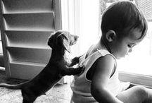 LITTLE LOVELY ANIMALS