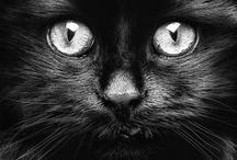 Photography - Animal