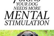 Pet Health & Info