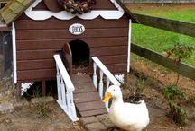 ❤️the farm / Life on the animal raising, food growing, porch swinging farm.