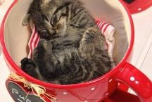 teacup pets / Teeny tiny pets that make us feel warm inside
