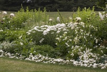White Garden / William Harris and Jane Grant, the founders of White Flower Farm, considered growing and offering only white-flowered perennials and shrubs.  While that notion lasted about a minute as a business plan, the border remains. Have a look at our ideas for a white garden of your own. / by White Flower Farm