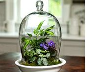 Terrariums / Enjoy the beauty of a greenhouse in any room! Our Terrarium Kits provide a perfect home for slow-growing plants that thrive in bright, indirect light. These plants will grow happily with surprisingly little effort from you. In return for minimal care, they'll provide greenery the year round without complaint. / by White Flower Farm