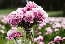 Peonies as Cut Flowers / Peonies make superior cut flowers, lasting more than a week if cut in full bud. It just so happens that Peonies bloom in June, which is a popular month for weddings. Consider planting a wedding garden that will bloom each year on your anniversary. / by White Flower Farm