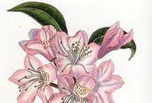 VISUAL ART- Botanical