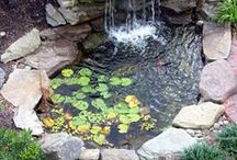 Ponds / Have a pond? Or thinking of adding this wonderful feature in your garden? Here are some amazing ideas and tips to keep your pond thriving!