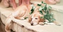 Pets at Weddings / We've seen a few dogs at weddings before now and here are some of our favourite pets at weddings for the four-legged loving bride and grooms out there!!
