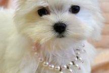Dogs / beautiful puppies