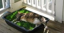 """Catio / """"Patio for cats"""" ;)"""