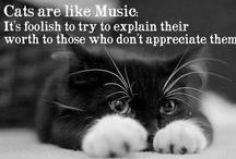Cats / by Tonya Marshall