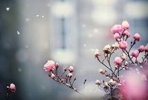 CLOSE-UP NATURE PHOTOS / inspirational macro, nature photos (bokeh..)