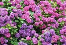 gardening / Pot plants etc