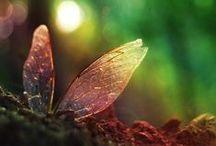 Fairyland / Enchanted magical worlds