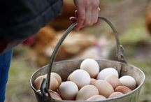 Love for Farm Fresh Eggs