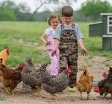 Kids & Chickens / Chickens can make some of the best childhood pets. They teach lifelong lessons, show where food comes from and can even become a child's best friend.   Follow this board for photos of fun and happiness!