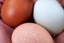 Eggs by Breed / Which chickens lay brown eggs? How can I get blue eggs? Backyard chickens can lay a variety of egg colors, depending on breed.   Follow this board to learn how to get a full color palette of farm fresh eggs!