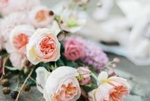 Coral Wedding /  a stunning stunning colour...