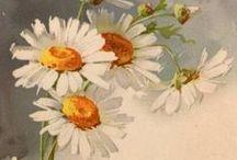 flower art / güzel çiçekler