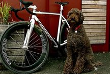 自転車 / 自転車