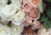 Dusky Pink, Ivory + Sage Palette / A beautiful and calming collection of Dusky Pink, Ivory and Sage pieces