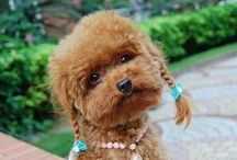 Animals - Djur / Pictures of cute animals