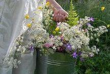 Litha - Solstice d'été / Fête du solstice d'été, le 21 Juin. La nuit la plus longue de l'année et où la puissance de la nature est à son apogée. On récolte les herbes magiques en cette journée. On allume de grands feux de joie (célébration du soleil), on partage les fruits, herbes et légumes de saison, on se procure des herbes et les huiles qui serviront aux rituels et recettes (chêne, lierre, fougère, sureau, thym, gui, chèvrefeuille, rose, verveine, millepertuis, lys, digitale..)