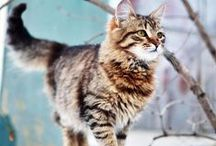 Cats ♡.♡