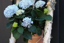 Magical Hortensia / Magical Hortensia - Diy
