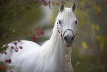 Equine / by Edie Barger