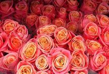 Flowers / Flowery inspiration