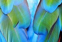 feathers / for many years, feathers have acted as a guide. whenever i see one on my path (no matter where i am), i know i'm going in the right direction. this has really helped my trust at times. i love feathers!