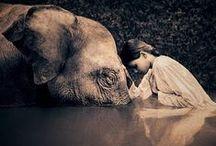 Tiere / wonderful creatures