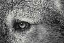 wolves / .howl.