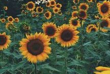 bloom / .flower power.