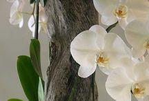 Aranjamente florale ( plante de gradina)!