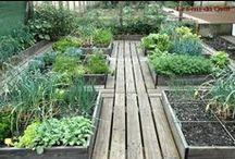 Garden / Something magical ... My futur garden is here :)