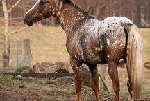 Horse Coats