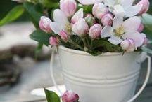 018 - Plantes & Fleurs