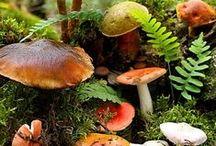 flora & fauna... & rocks