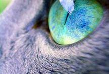 mis gatos preferidos / Los gatos son increibles....