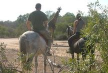 Hanchi Horseback Conservation / Help patrol an african wildlife reserve on horseback, working with former racehorses!  More information at https://www.conservationafrica.net/project-categories/wildlife-conservation-management/hanchi-horseback-conservation