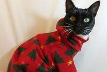 animal clothes