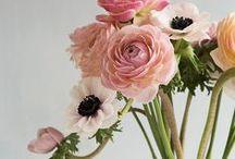flowers, my love