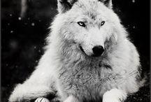 hear me howl