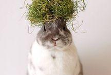Bunny / BunnyBunnyBunny