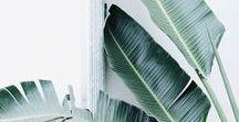 JET's    botanical