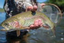 Fishing Retreats