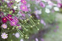 Tuin/Garden